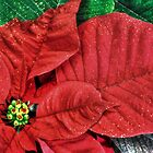 Christmas Poinsettia___for my friend Joyce (Fara) by Poete100