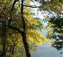 Autumn Gold by oscars