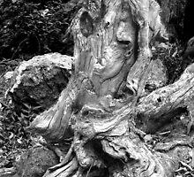 Rainforest relic by Argentum