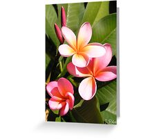 Nanna's Frangipanis Greeting Card