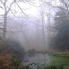 The pond in Eastham Country Park. by EdgeOfReality
