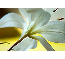 Lilly Photographic Print