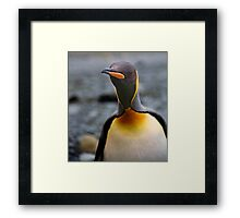 King Penguin Up Close & Personal Framed Print