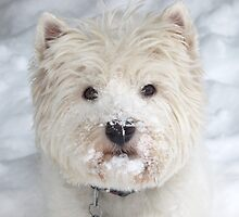 Walking in a Westie Wonderland by MarianBendeth