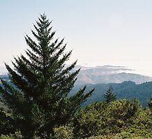 Xmas tree on Mt Tam by stephen hewitt