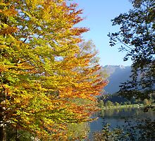 Autumn's touch by oscars