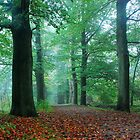 A green October forest path by jchanders