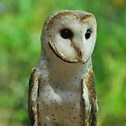 Barn Owl Portrait by Penny Smith