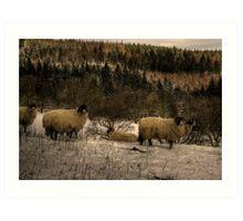 Are Ewe Cold?.... Art Print