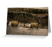 Are Ewe Cold?.... Greeting Card