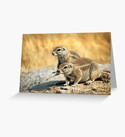 Ground Squirrels Greeting Card