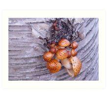 Tree mushrooms Art Print