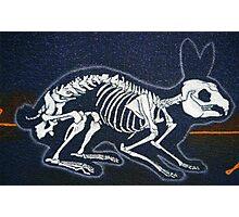 Rabbit Skeleton Photographic Print