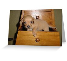 PUPPY IN A DRAWER Greeting Card