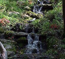 Rainbow Springs, Florida by Junebug60