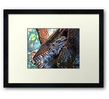 Sleeping Gator Framed Print
