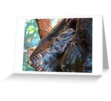 Sleeping Gator Greeting Card