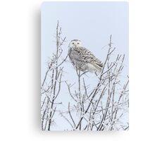 Snowy Owl 2014 4 Canvas Print