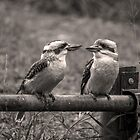 Laughing Kookaburras in Sepia by JLOPhotography