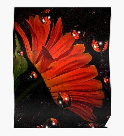 Bubbly orange..... Poster