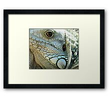 IGUANA EYES Framed Print