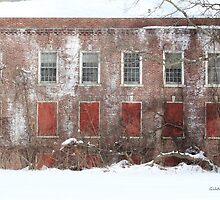 Winter Red and White Blight by Gilda Axelrod
