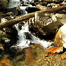 Icy Mountain Stream by Marcaribe