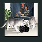 Cats and Camera by Martine Carlsen