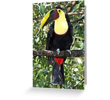Swainson's Toucan Greeting Card