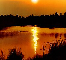 On Golden Pond by Anthony Hedger Photography
