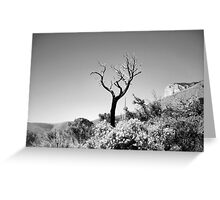 Dead Tree, Blue Sky in Black & White Greeting Card