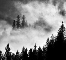 Burning Forest by Dan Jesperson