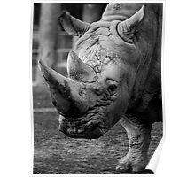 Rhino right on.... Poster