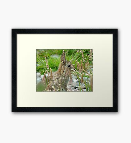 I Have My Eye On YOU! - Wild Bunny - NZ Framed Print
