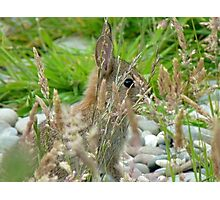 I Have My Eye On YOU! - Wild Bunny - NZ Photographic Print