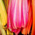 Rainbow Chard by Carla Adams
