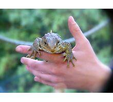 Be Gentle... I'm Protected...Tuatara - lizard - NZ Photographic Print