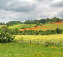 Elderflowers, Daisies, Buttercups, and Poppies by Roantrum