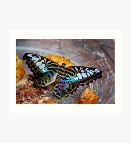 The Butterfly Art Print