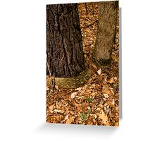 Jennings Creek Series - Root Hug Greeting Card
