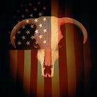 Cow Skull and American Flag by darrinb