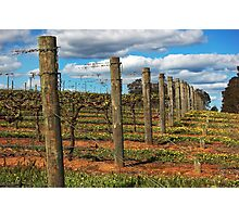 Vineyard # 3 Photographic Print
