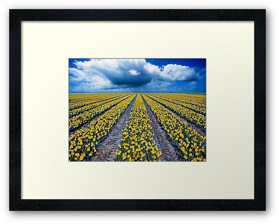 Spring Fields by Jacky