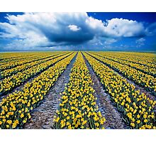 Spring Fields Photographic Print