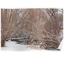 Winter on the Provo River Poster