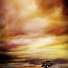 Lonely Tree. by David Amos