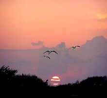 Gulls at Dusk by chardy