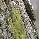 tree moss by gypsykatz