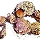 SEASHELLS by the SEA by SHARON SHARPE by sharonsharpe