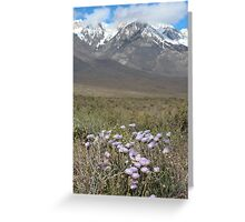 East Side Asters Greeting Card